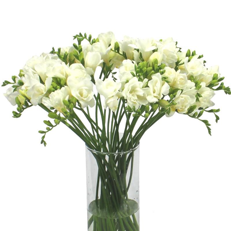 Цветок фрезия белая